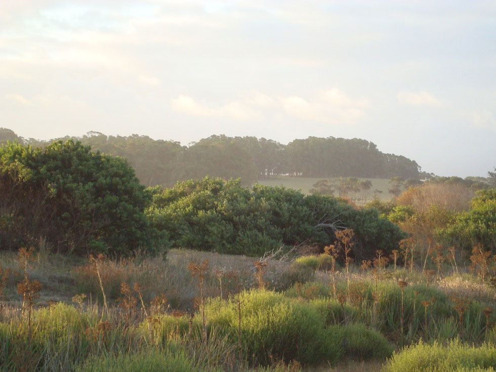 La Rocha Laguna